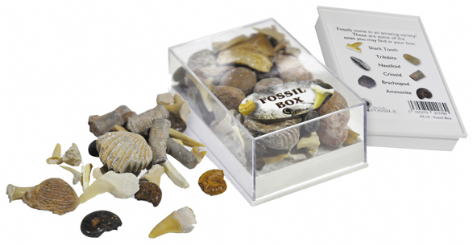 Fossils Box (selection of fossils)